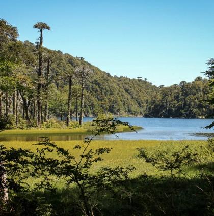 Pucon, prémices patagoniennes…